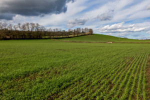wiosenna ochrona herbicydowa zbóż