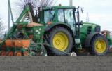 siew kukurydzy w zimną glebę