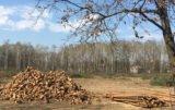 wycinka drzew a zgłoszenie do gminy