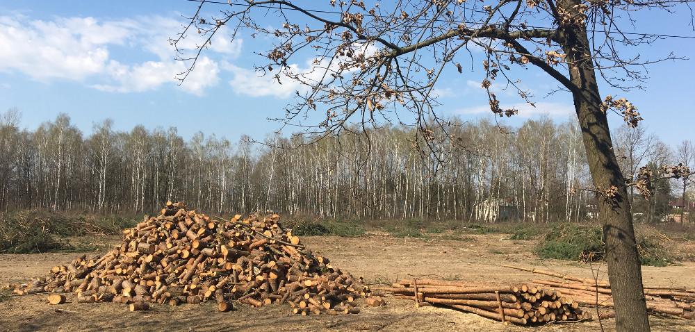 Nowe przepisy: wycinka drzew po zgłoszeniu do gminy!