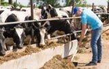 Bezpieczeństwo pracy w rolnictwie - warto o nie zadbać
