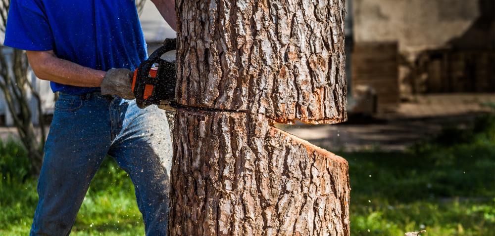 Wycinka drzew – niebawem zmiana przepisów