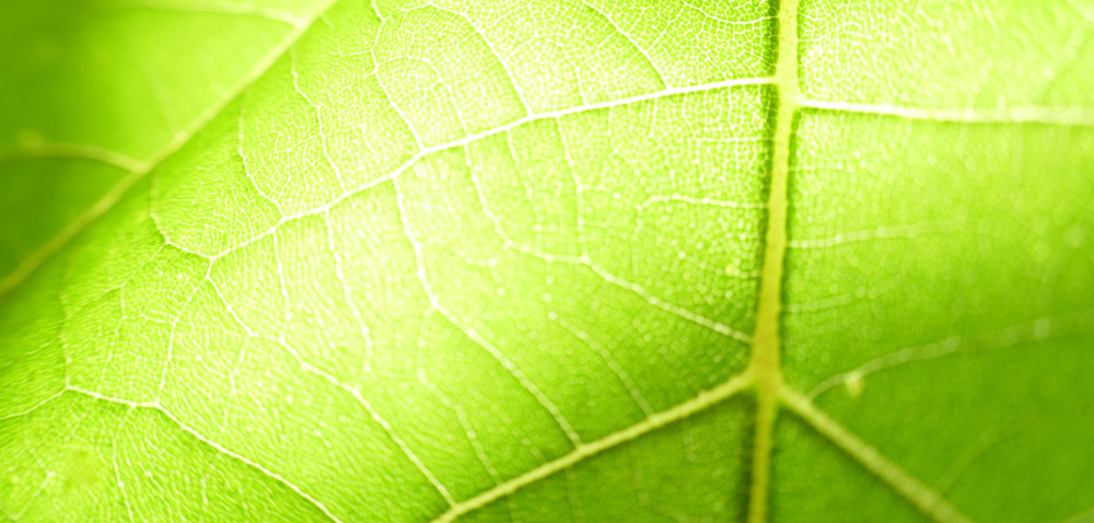 Prawidłowa fotosynteza – być albo nie być owoców