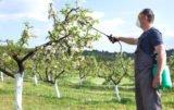 oprysk drzew w sadzie