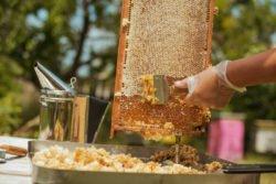 hodowla pszczół krok po kroku