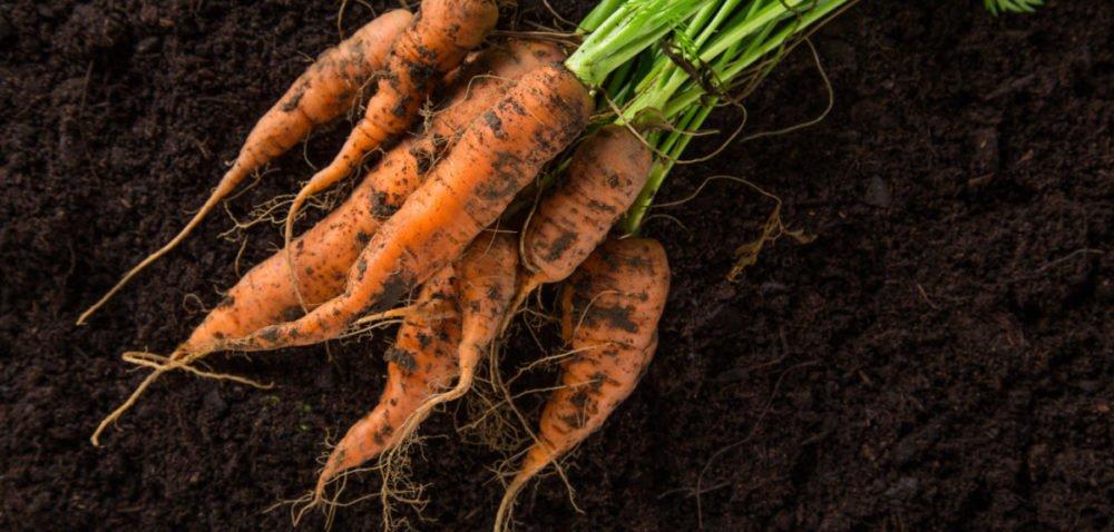 Jak poprawić rozwój systemu korzeniowego warzyw?