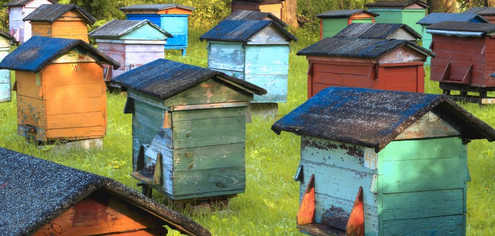 Czy własna pasieka to dochodowy biznes – hodowla pszczół krok po kroku