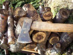 nowe przepisy owycince drzew