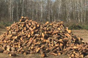 Zaostrzone nowe przepisy owycince drzew już obowiązują!