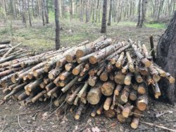 stos ściętych cienkich drzew