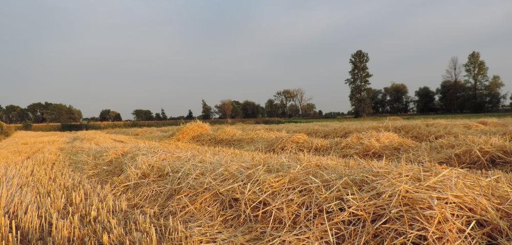 Rozdrabnianie słomy na polu – jakie są korzyści?
