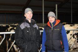Krowy rasy HF są coraz popularniejsze