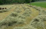 drugi pokos łąki