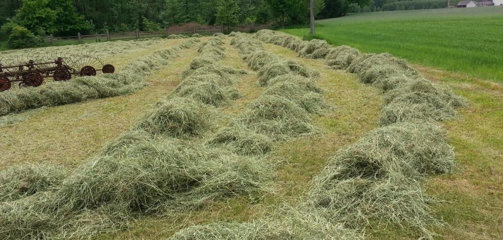 Drugi pokos łąki – siano od Ado Z