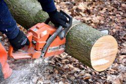 cięcie drzewa piłą mechaniczną