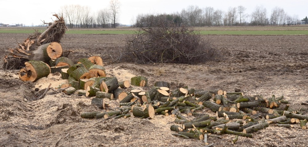 Wycinka drzew – zaostrzone przepisy wchodzą wżycie!
