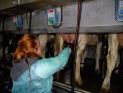 Przyszły rolnik poznaje swój fach od poszewki (fot. CEO Szczecin)