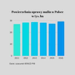 Prognoza ceny malin 2017 r.