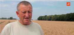 Rolnika interesuje pszenica jakościowa