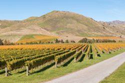 rolnictwo wNowej Zelandii