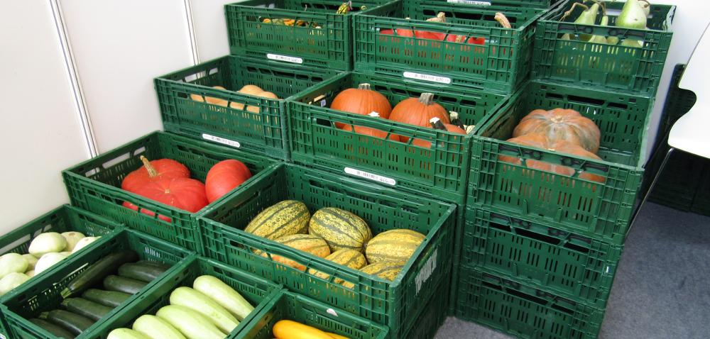 Bio warzywa wBelgii – woda jedynym ratunkiem