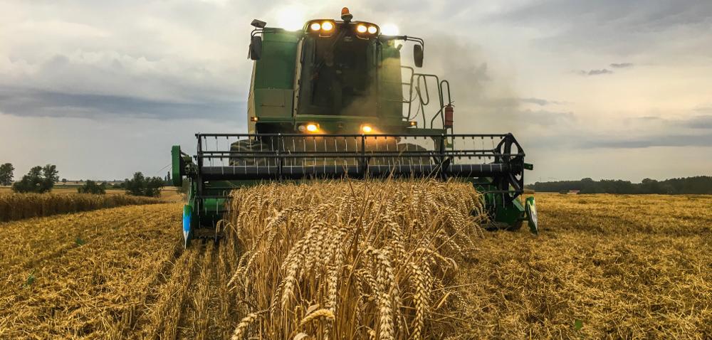 COBORU pszenica 2017- wyniki plonowania