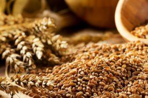 Ceny zbóż isoi gwałtownie wzrosły