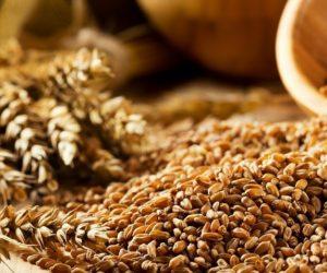 Światowa produkcja pszenicy idzie na rekord?