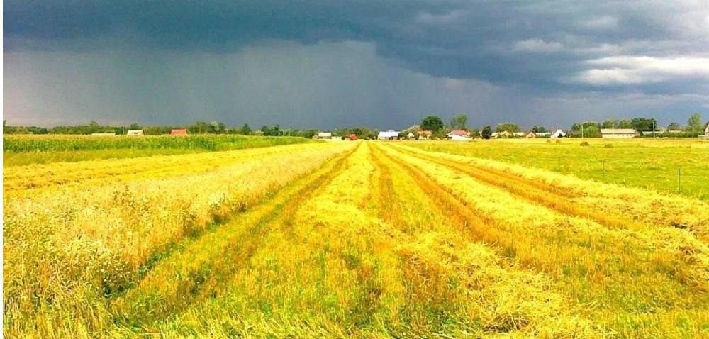 Rolnictwo wPolsce – jak oceniamy jego stan?
