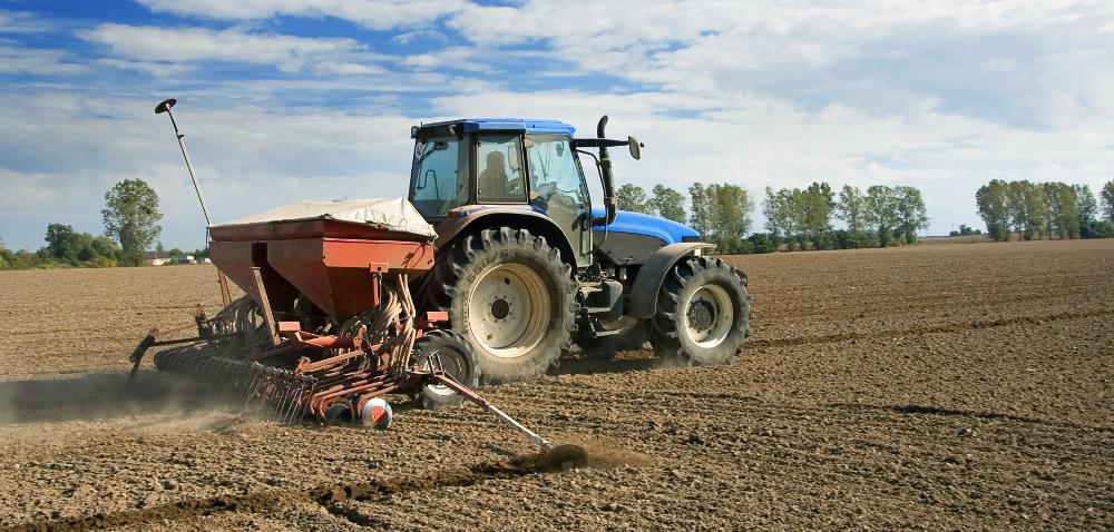 Dobór odmian pszenicy dopasowany do terminu siewu iprzedplonu