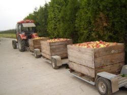 Jabłka przemysłowe są wPolsce za drogie