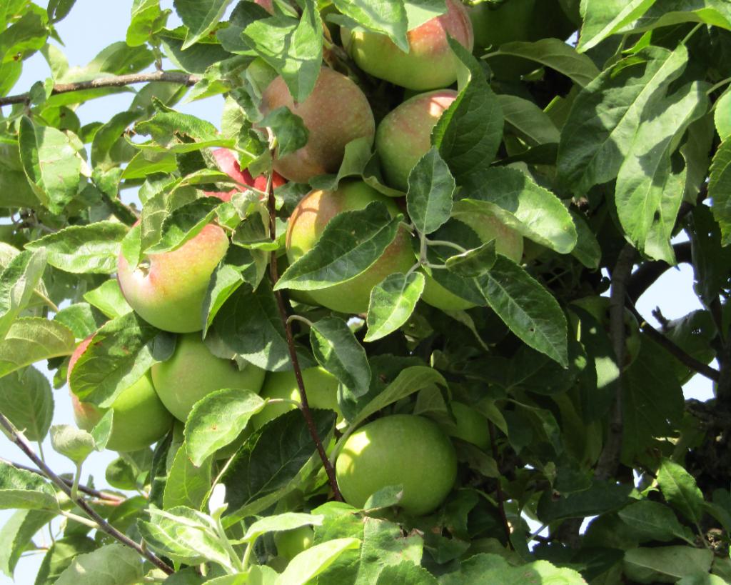 Drzewka ekologiczne powinny być pieczołowicie chronione przed patogenami