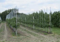 Wilgotność gleby ma podstawowe znaczenie wunikaniu zmęczenia gleby wsadzie