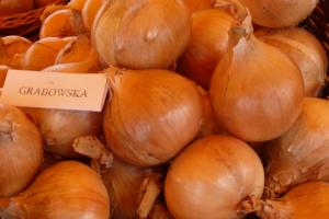 Nawadnianie gleby konieczne dla wzrostu cebuli