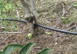 Ochrona gleby jest kluczowa wprowadzeniu eko sadu