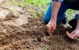 Badanie gleby