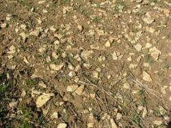 Nadmierna kamienistość gleb