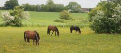 Pomoc dla rolników zobszarów Natura 2000
