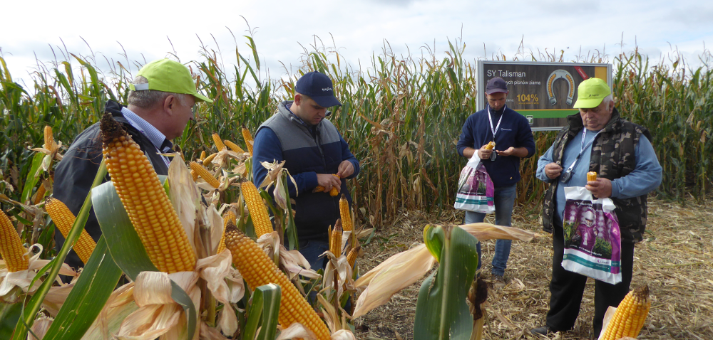 Uprawa kukurydzy na ziarno inie tylko – Pola Klasy S