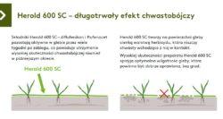 Herold 600 SC zawiera dwie substancje biologicznie czynne oróżnym sposobie działania.