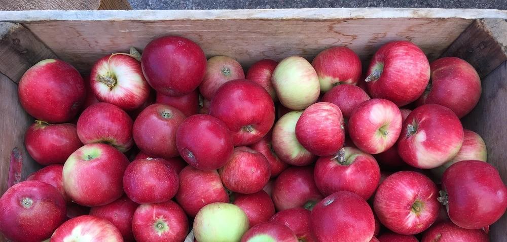 Ceny jabłek – sadownicy mają powody do radości