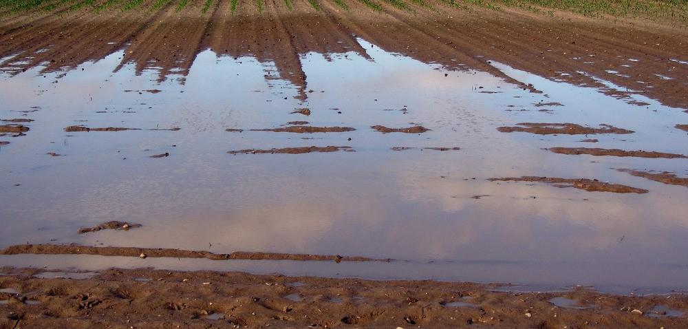 Zastoiska wody utrudniają prace na polach