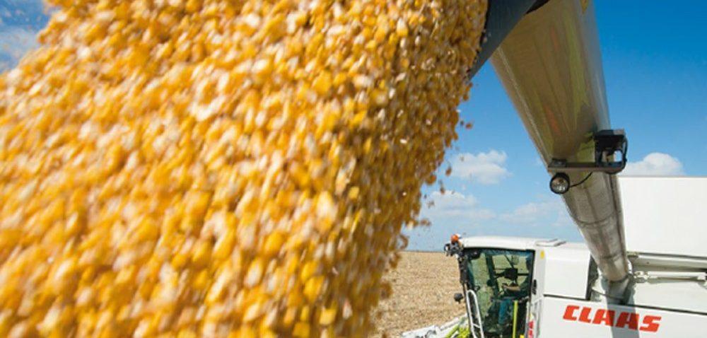 Rekord wzbiorze kukurydzy – już niebawem!