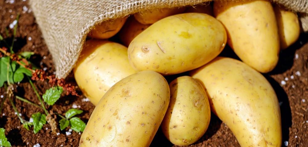 Choroby ziemniaka wprzechowalni – jak ich uniknąć?