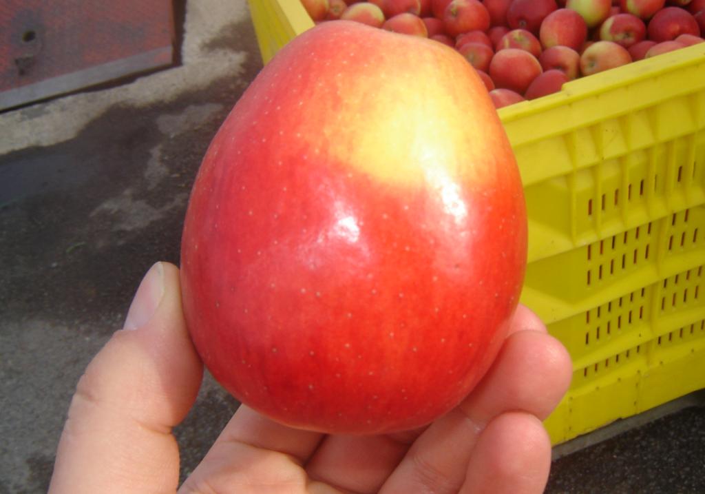 Jazz to droższe jabłka niż inne