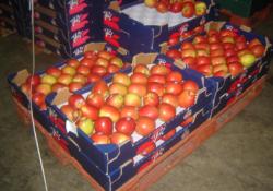 jabłka jazz wskrzynkach