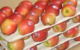 Jakość jabłek jazz jest skrupulatnie monitorowana