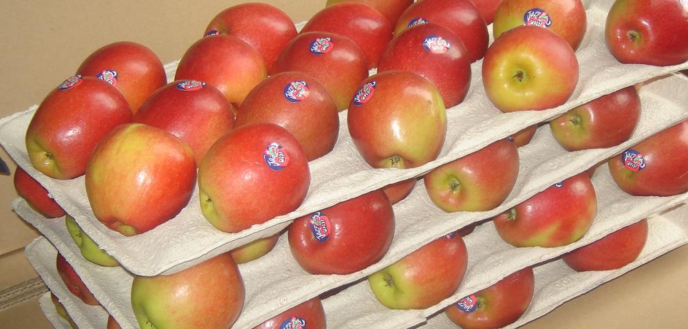 Jazz Scifresh to smakowity jabłkowy raj dla podniebienia