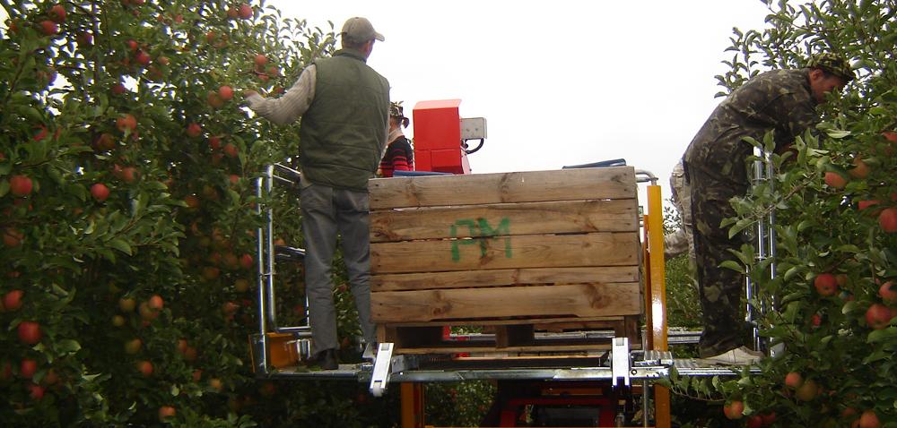 Grupa producencka Idealsad, czyli zdrowe jabłka zgminy Rybno