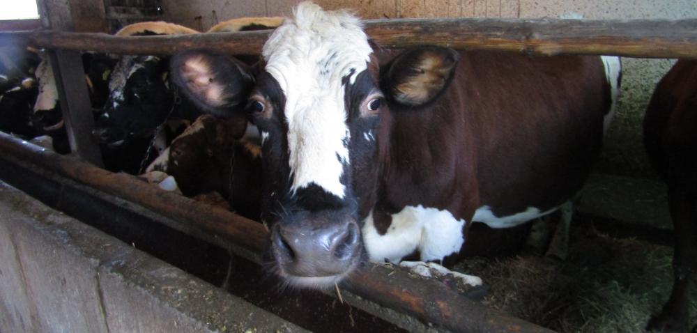 Mączka mięsno-kostna obniża koszty hodowli zwierząt?